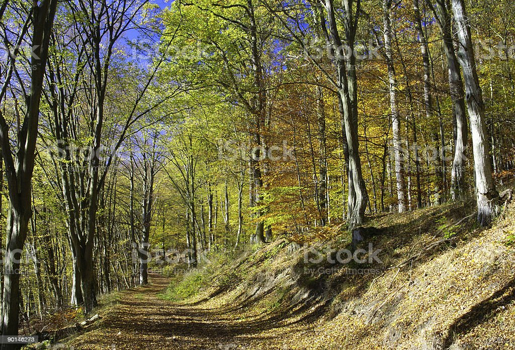 Fall woodland path royalty-free stock photo