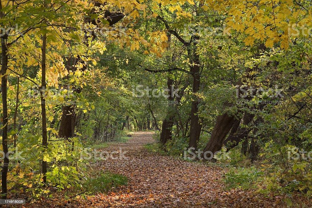 Fall Woodland Scene Hz royalty-free stock photo