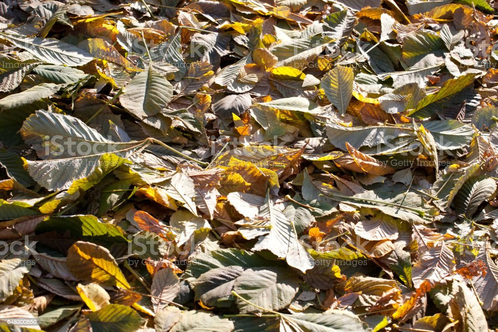 fall yellow leaves cover stock photo