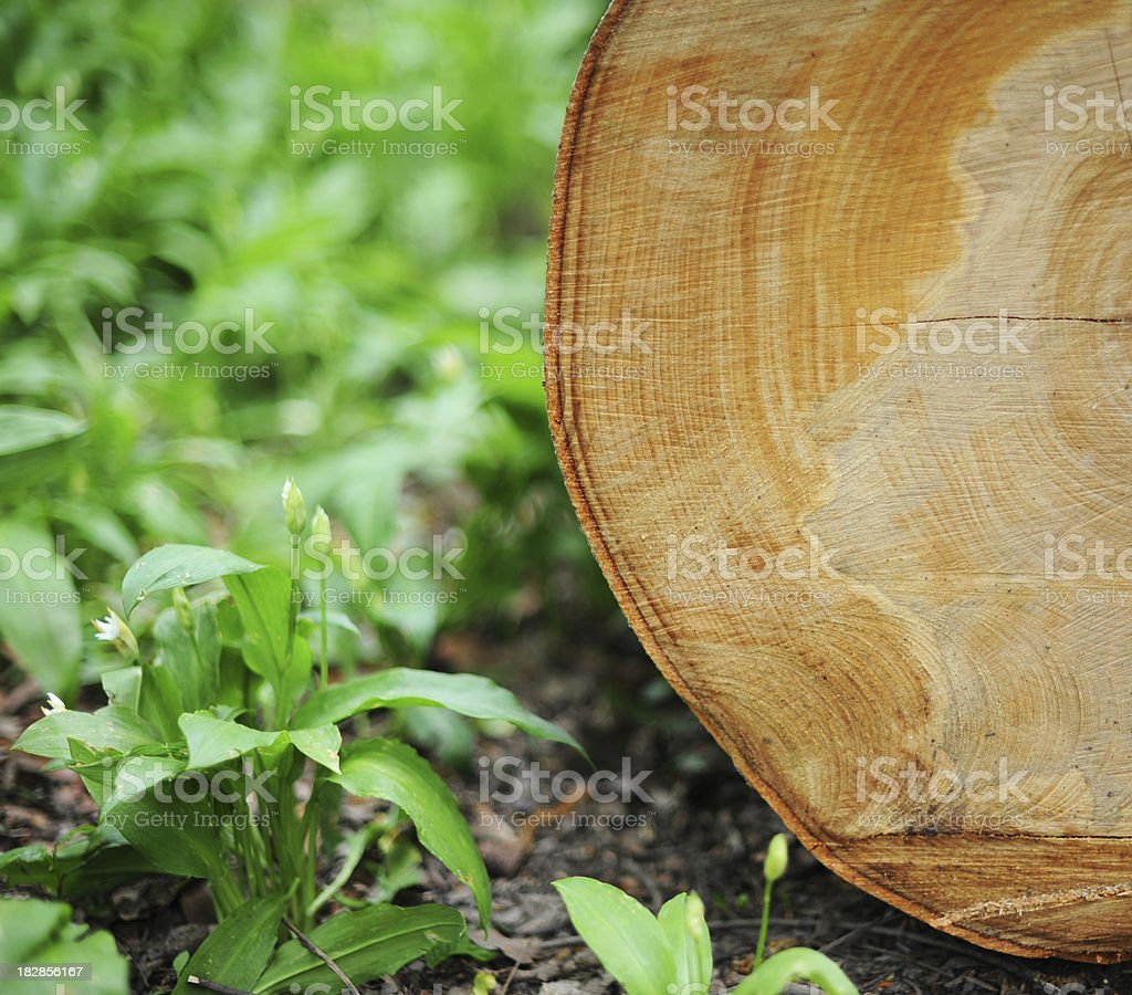 Falle Tree royalty-free stock photo