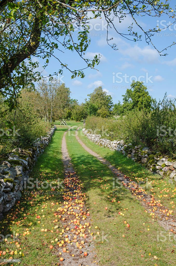 Fallen apples at a country road stock photo