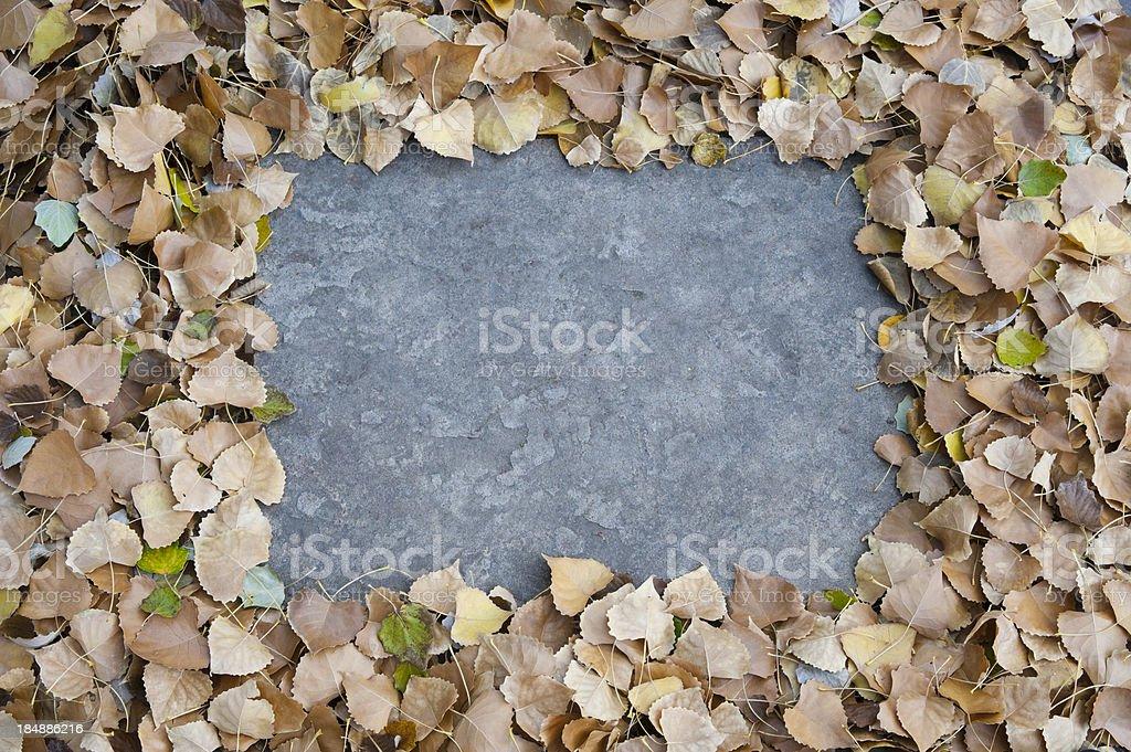 Fallen Aspen Leaves Picture Frame stock photo