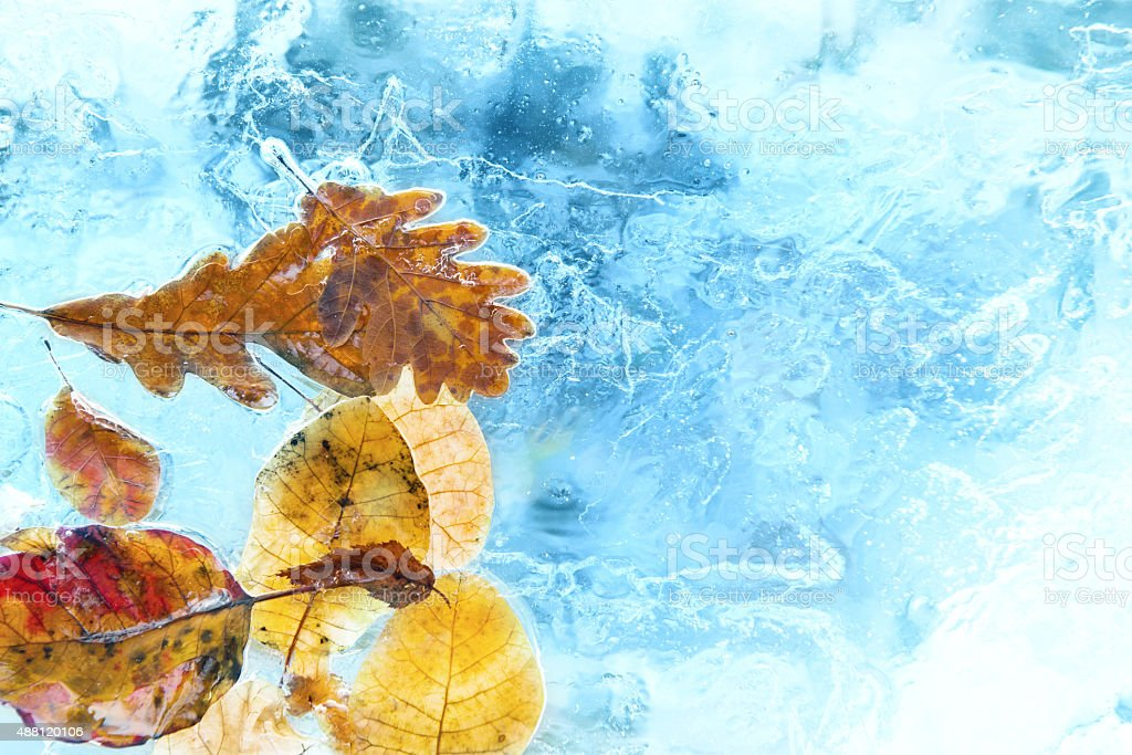 Fallen autumn leaves in the blue ice stock photo
