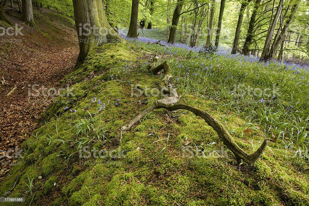 Fallen Branch royalty-free stock photo