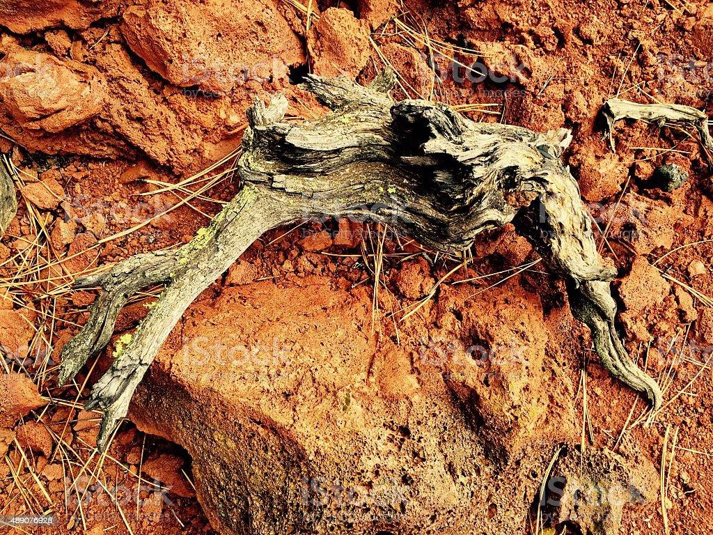 Fallen broken branch on the ground royalty-free stock photo