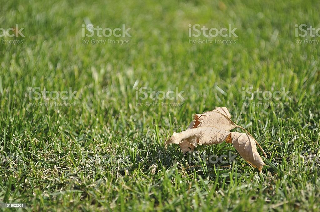 Powalone suchych liści na zielonej trawie w jesiennym zbiór zdjęć royalty-free