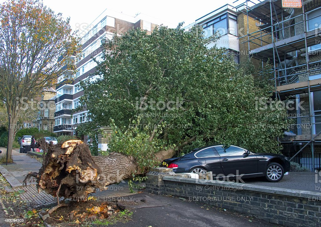 Fallen Elm Tree stock photo