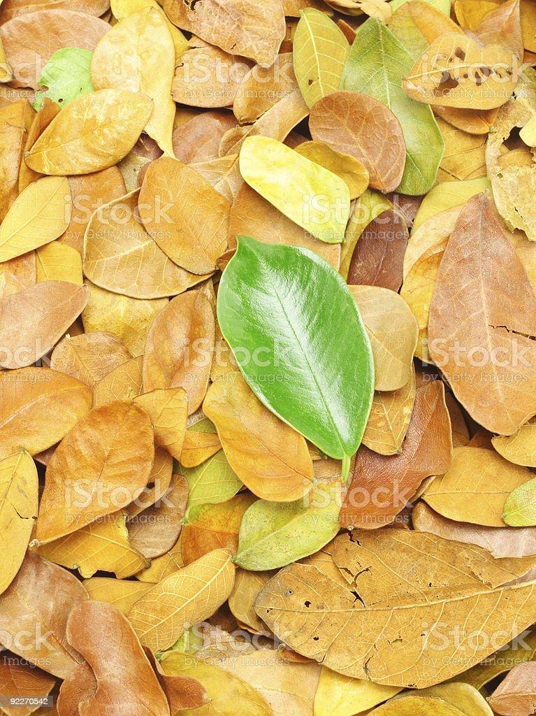 Fallen green leaf royalty-free stock photo