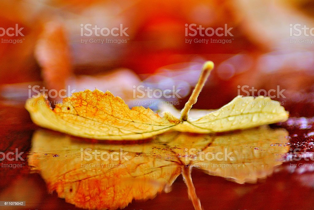 hoja caida en otoño royalty-free stock photo