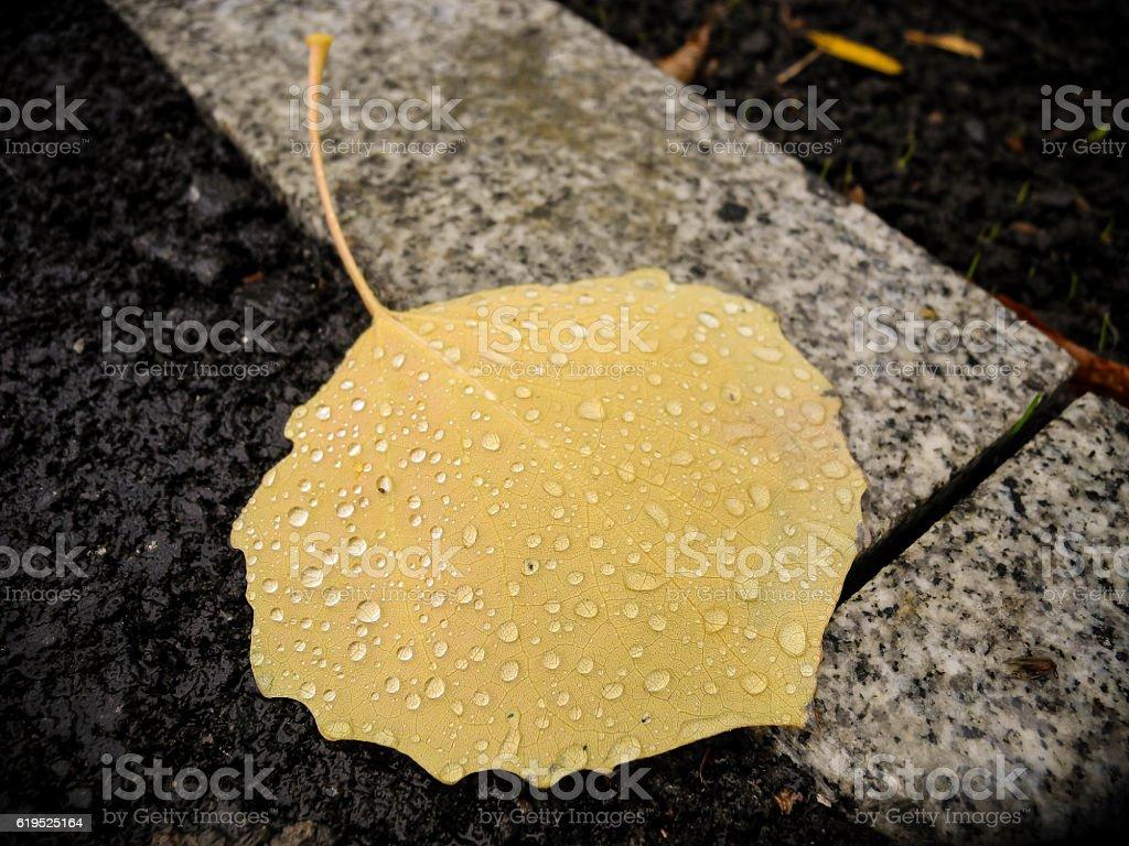 Fallen leaf in water drops stock photo
