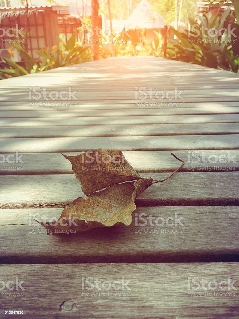fallen leaf on a wooden bridge royalty-free stock photo