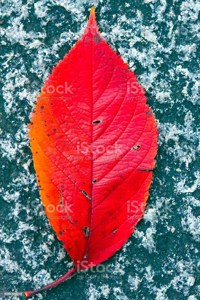 Fallen Leaf on Stoneground stock photo