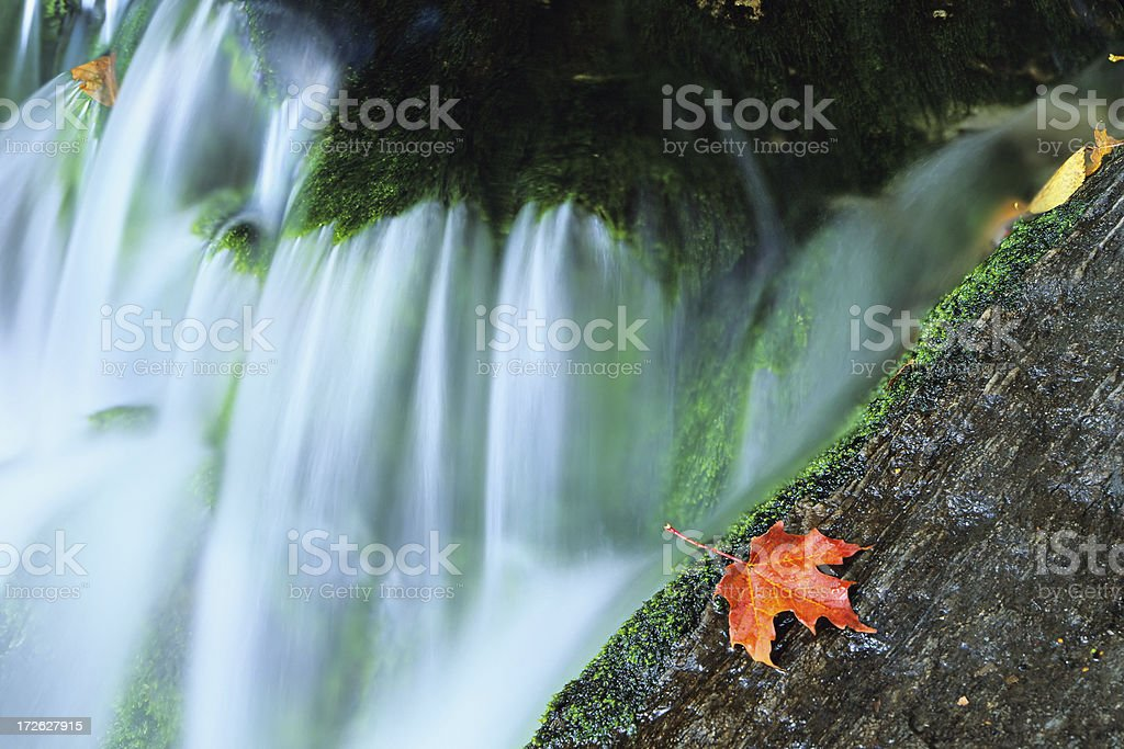 Fallen Leaf royalty-free stock photo