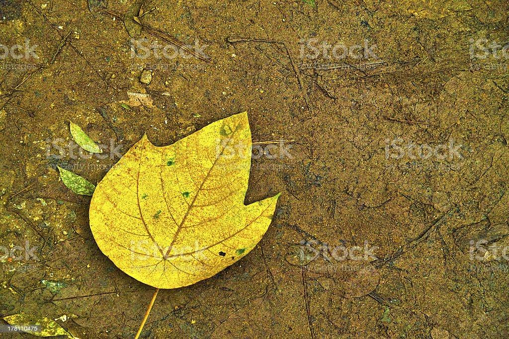 Fallen Leaf royalty-free stock photo