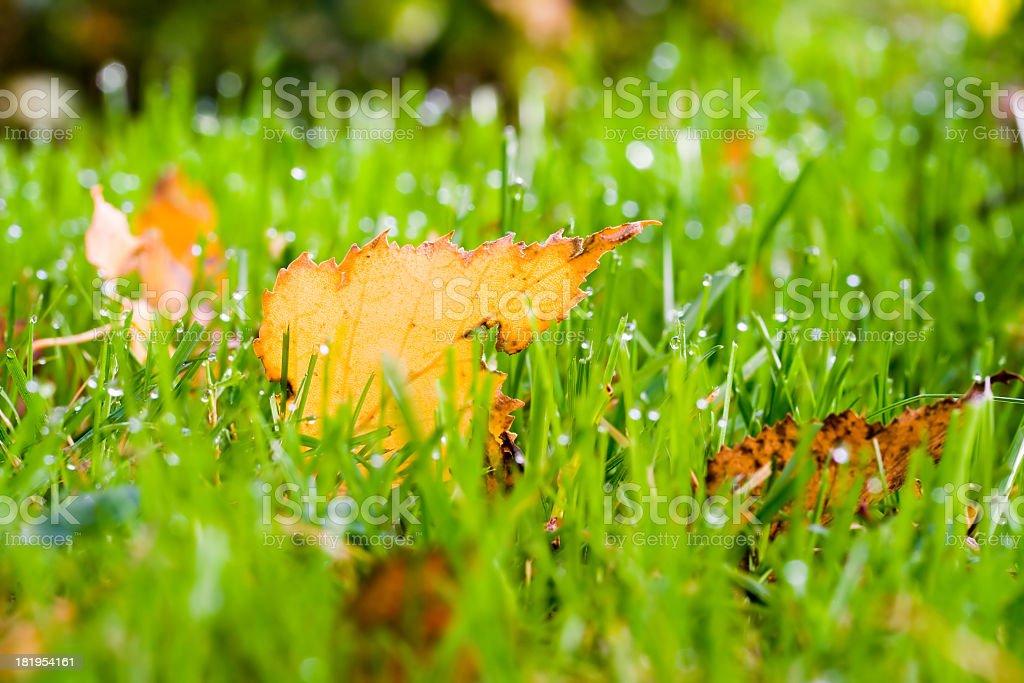 Fallen Leaf stock photo