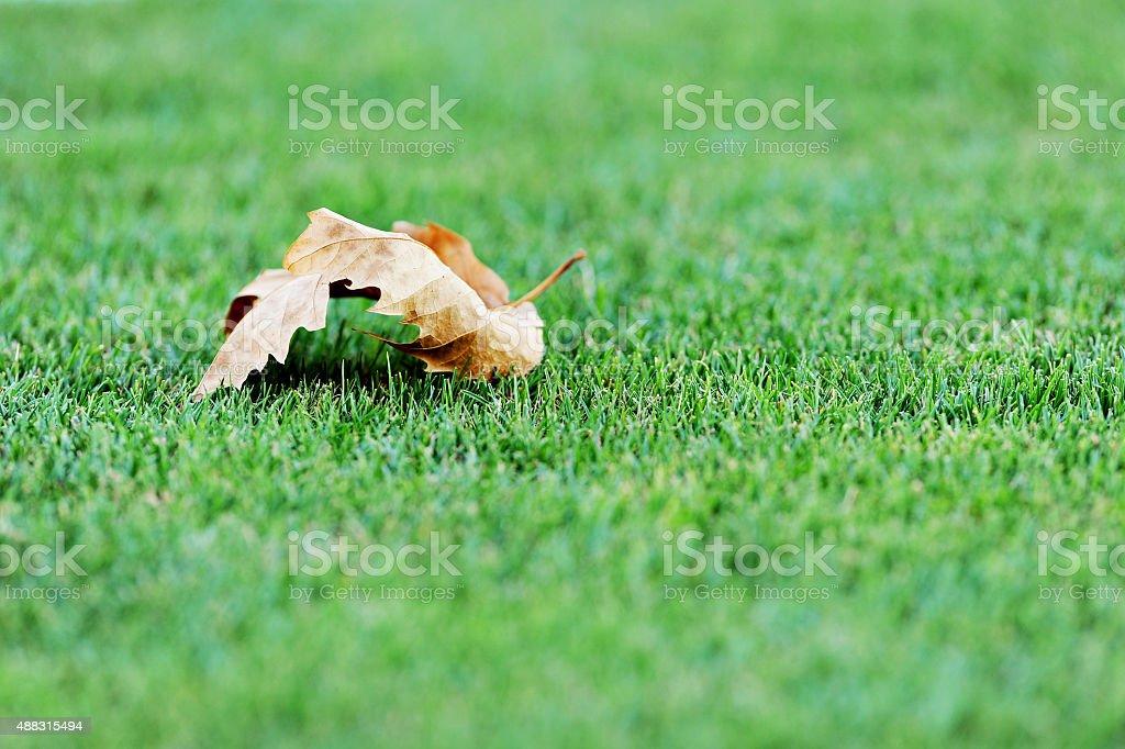 Fallen leave on a soccer field stock photo