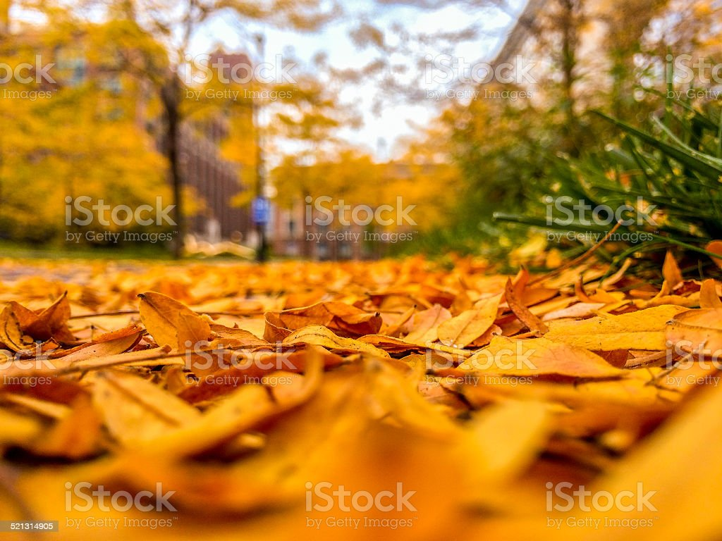 fallen leaves in Chicago royalty-free stock photo