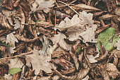 Fallen leaves of chestnut, maple, oak, acacia. Soft colors