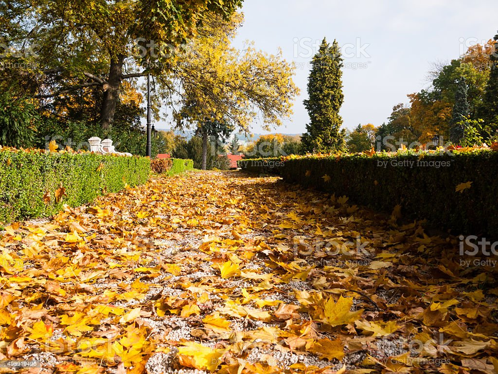 Fallen leaves on a sidewalk stock photo