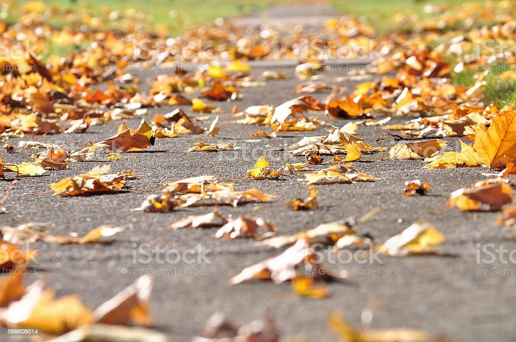Fallen leaves on a sidewalk. stock photo