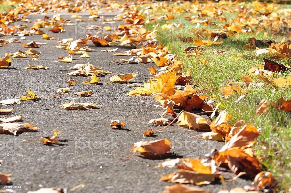 Fallen leaves on a sidewalk. stock photo