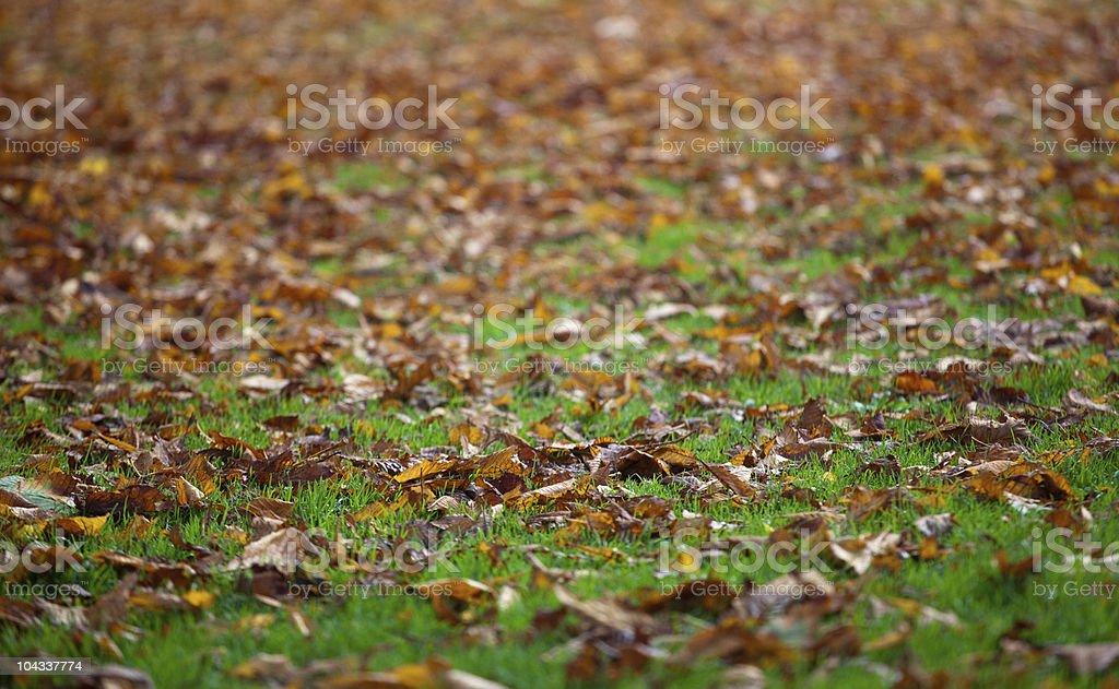 草の葉に降り注ぐ ロイヤリティフリーストックフォト