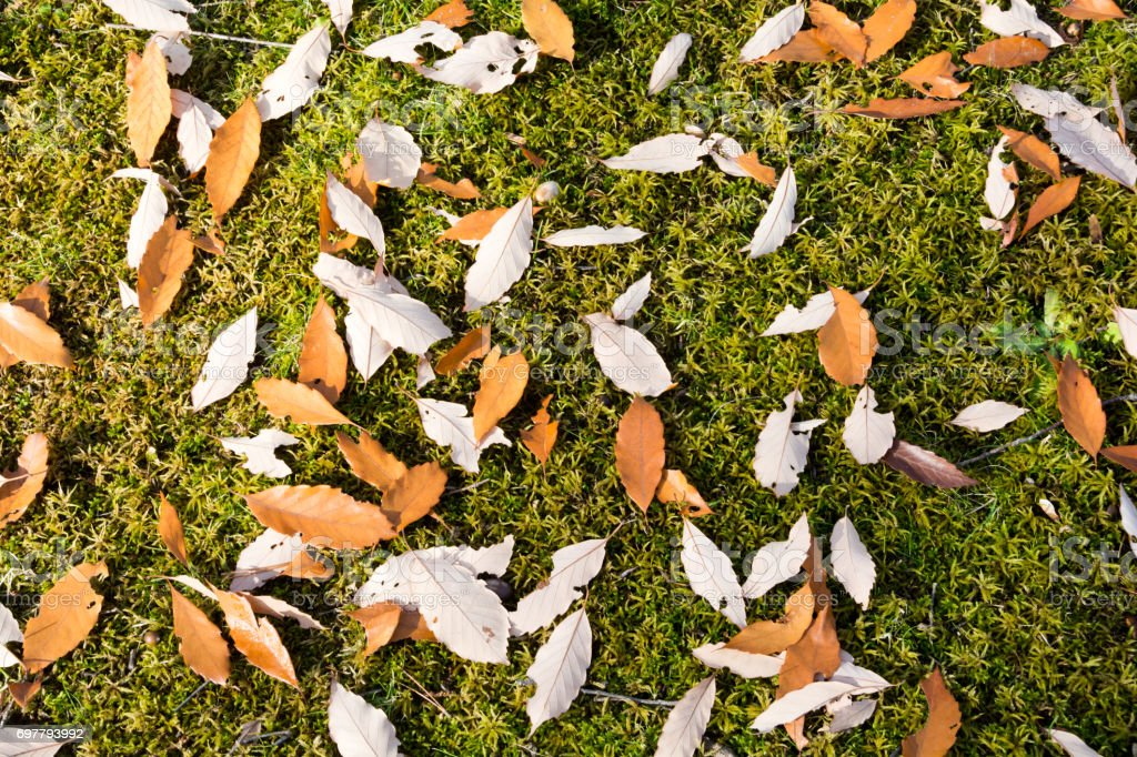 Fallen leaves on green moss stock photo