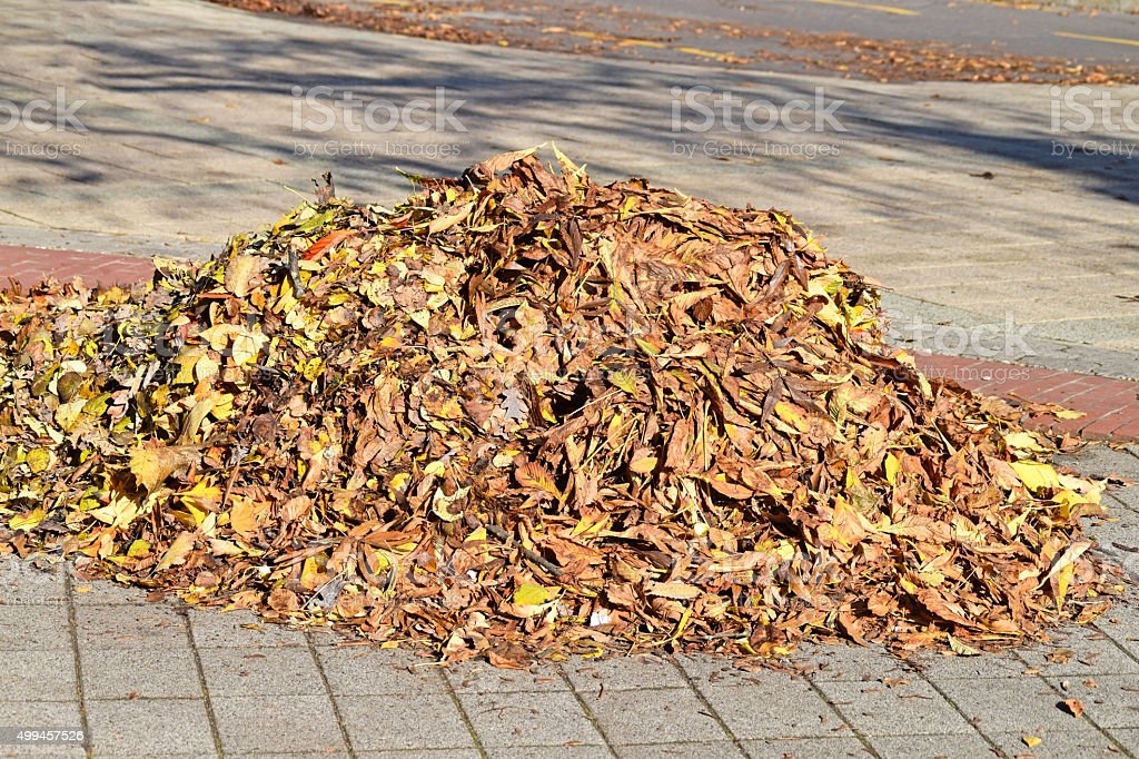 Fallen leaves on the city street in autumn stock photo