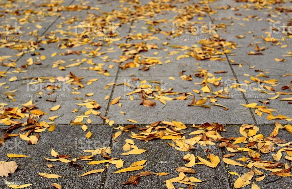 Fallen leaves on the sidewalk royalty-free stock photo