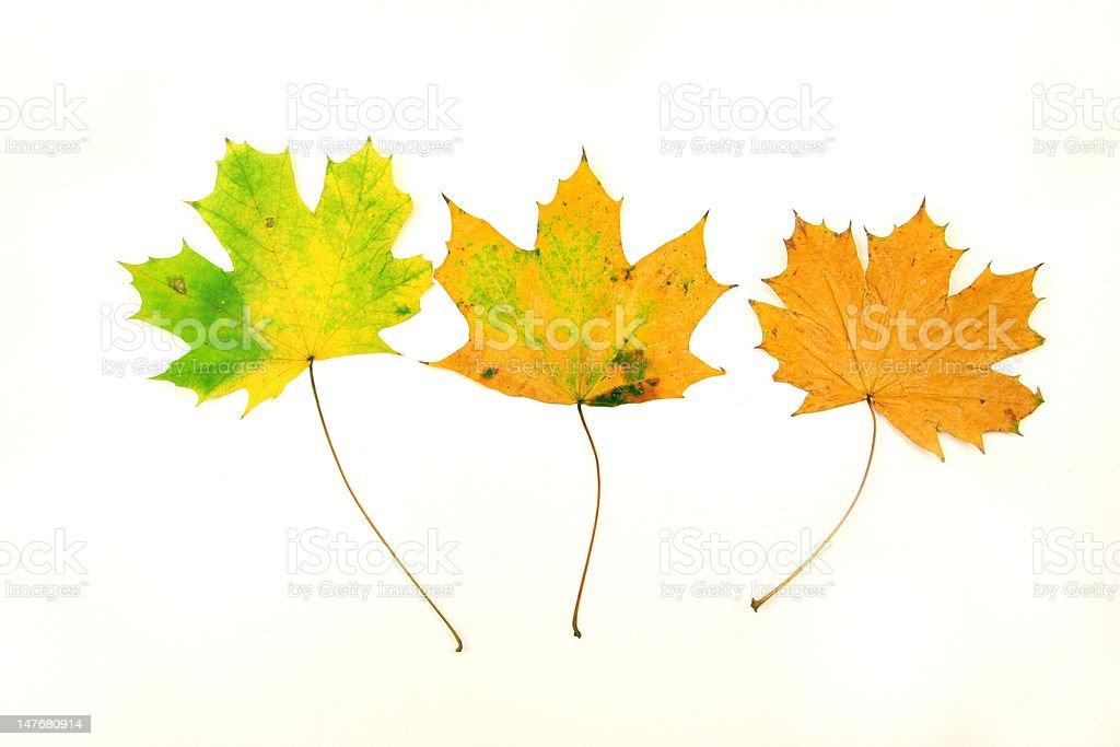 Fallen Blätter Lizenzfreies stock-foto