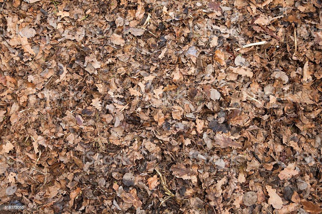Fallen Leaves Texture stock photo