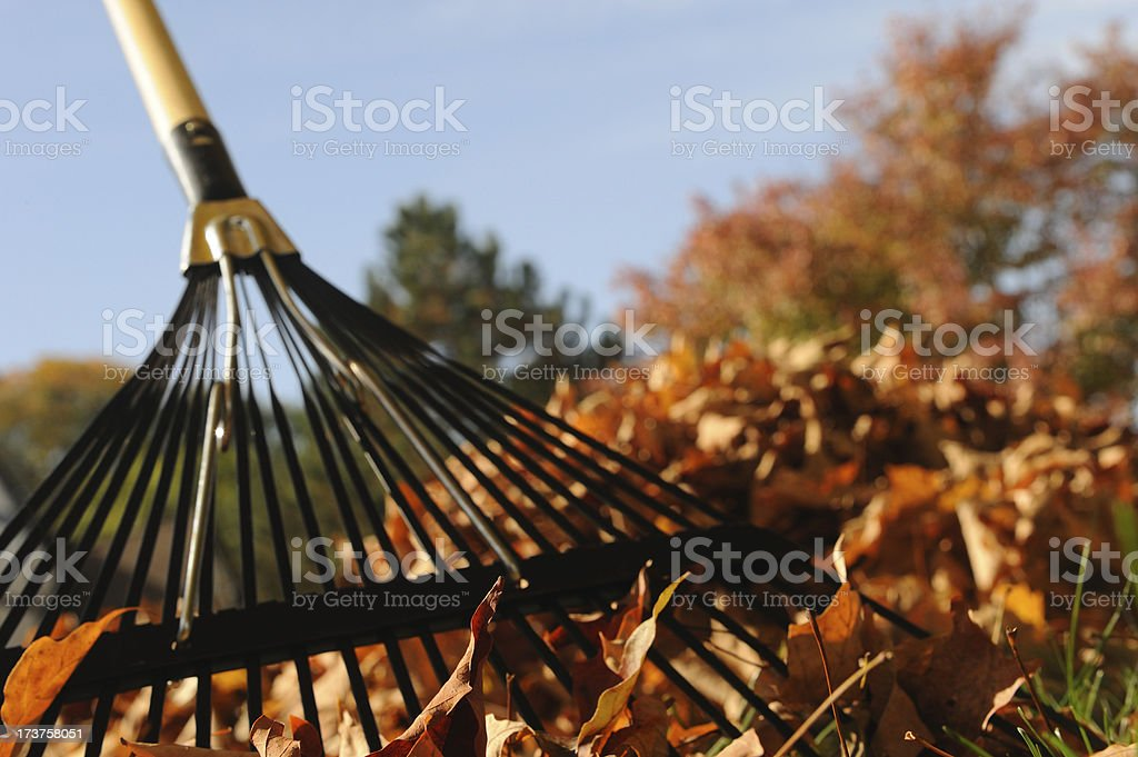 Fallen Leaves with Rake and Trees stock photo