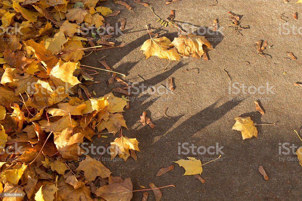 Fallen Maple Leaves on Sidewalk stock photo
