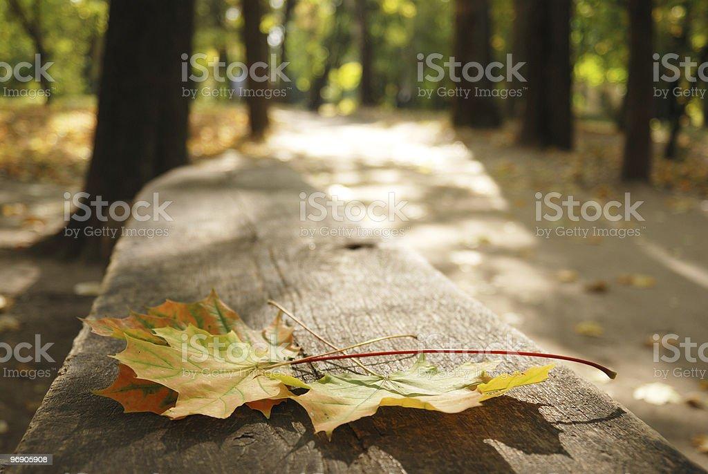 Fallen maple leaves. stock photo