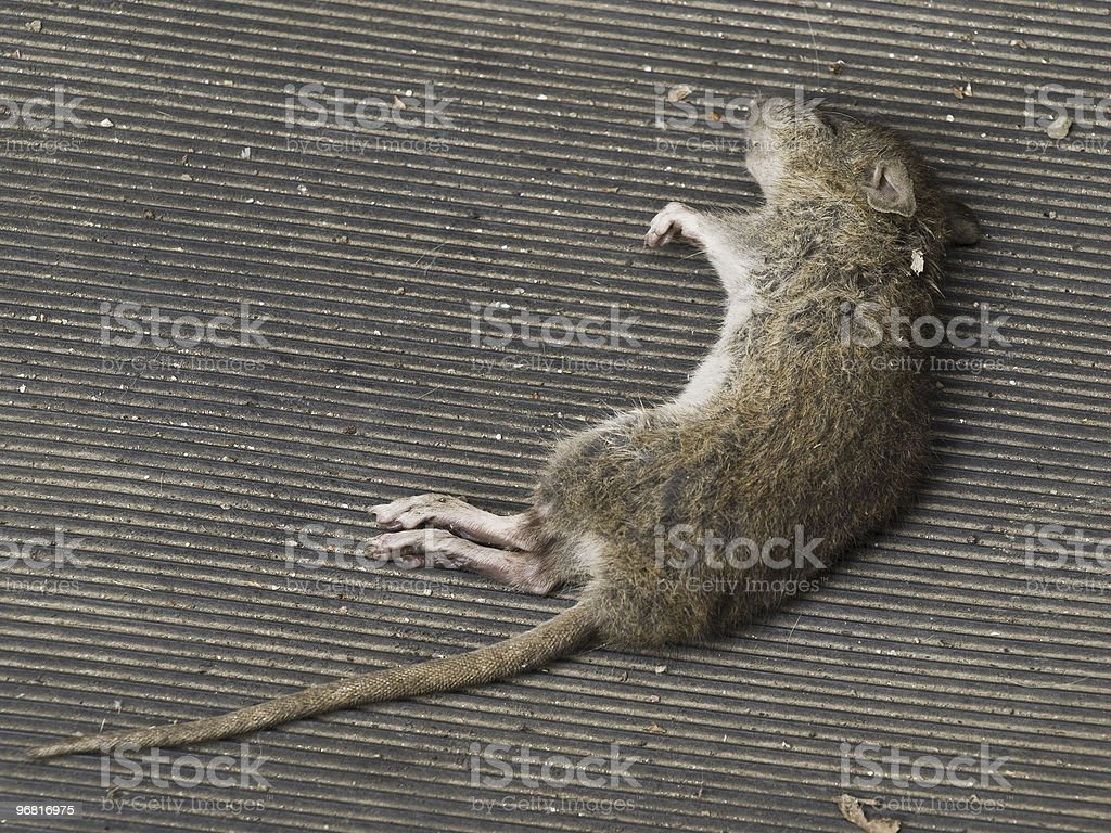 Fallen mouse stock photo