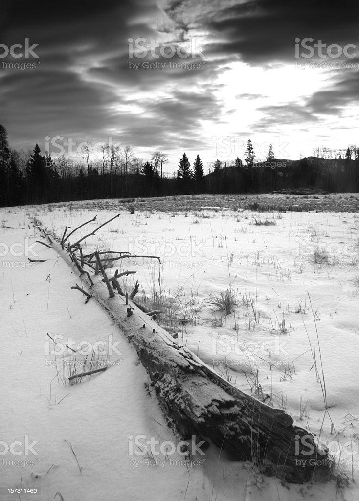 Fallen Pine royalty-free stock photo