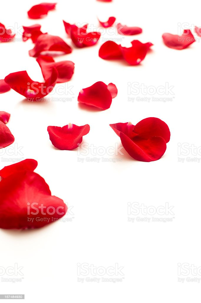 Fallen red rose petals royalty-free stock photo