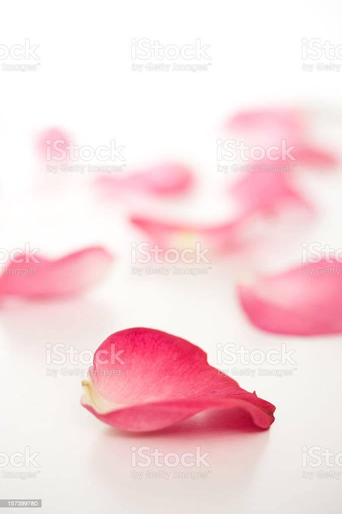 Fallen rose petals royalty-free stock photo