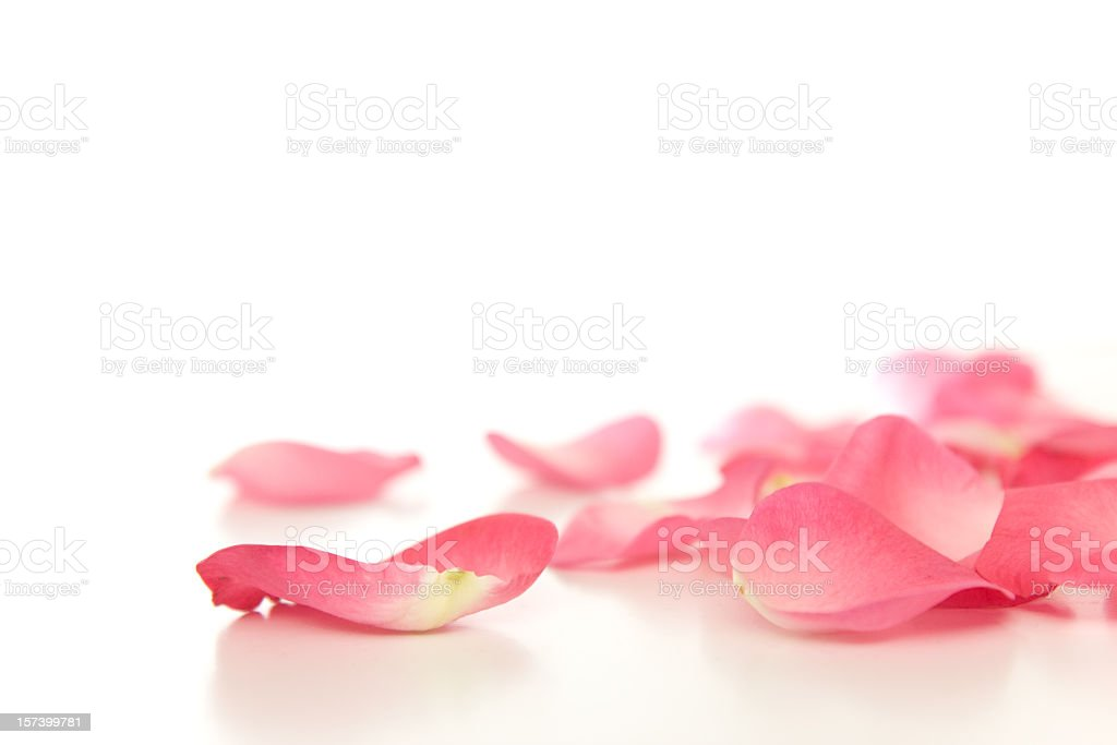 Fallen rose petals stock photo