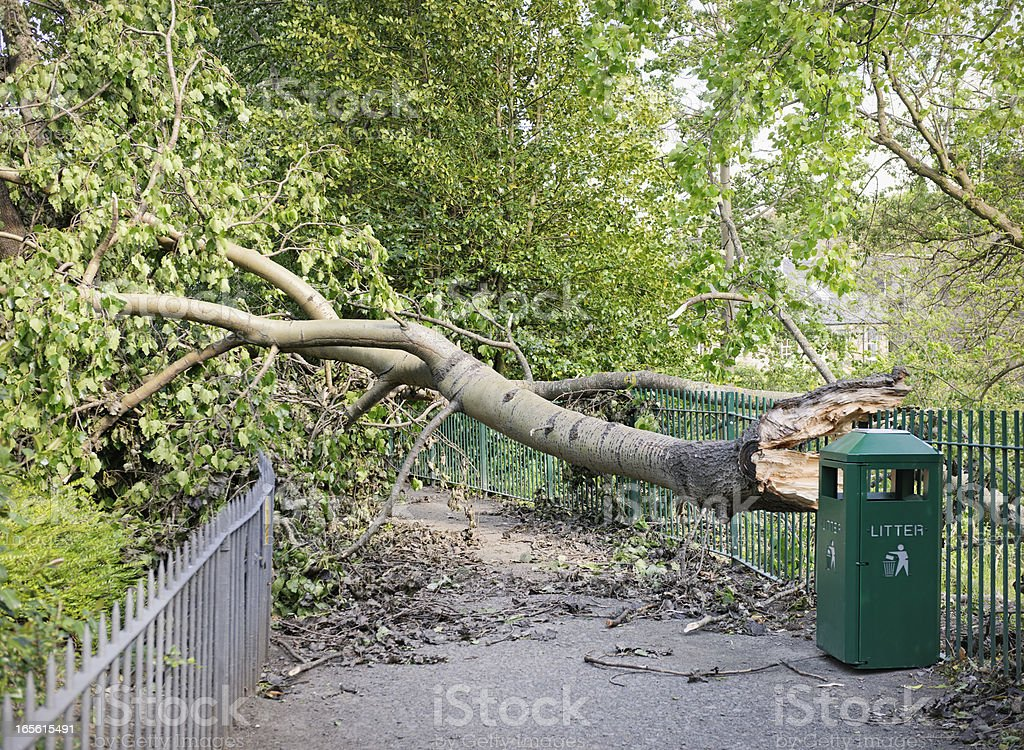 Fallen Tree Blocking a Path royalty-free stock photo