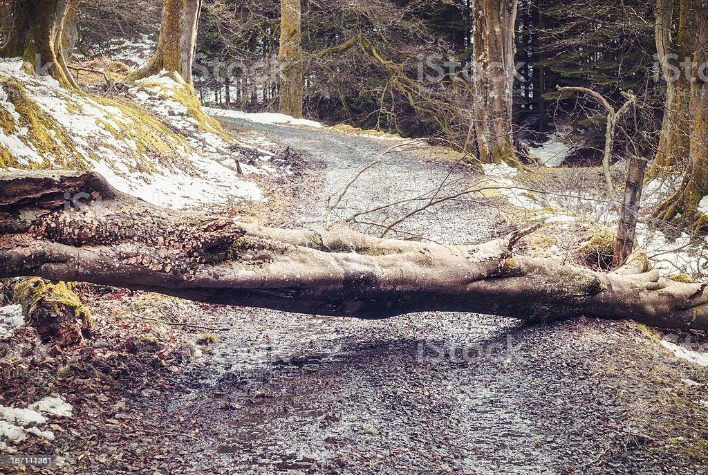Fallen tree blocking country road stock photo