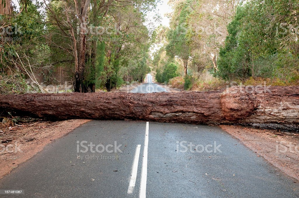 Fallen Tree Blocking Road stock photo