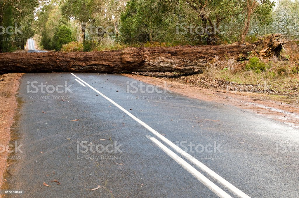 Fallen Tree Blocking the Road stock photo