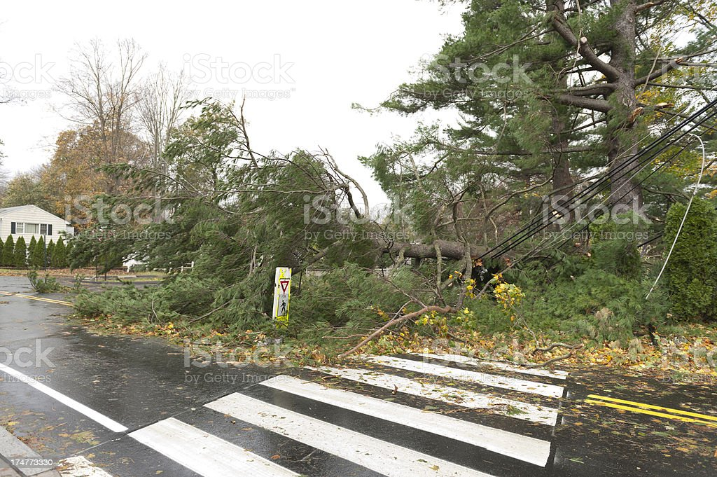 Fallen tree crushed power lines during Hurricane Sandy stock photo