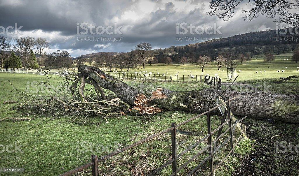 Fallen Tree Damage royalty-free stock photo