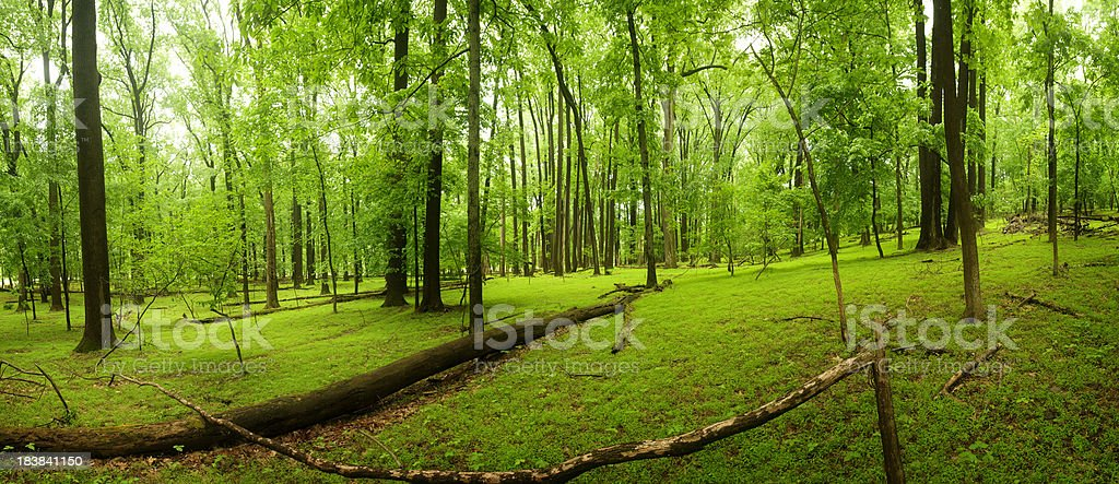Fallen tree in an incredibly green forest stock photo