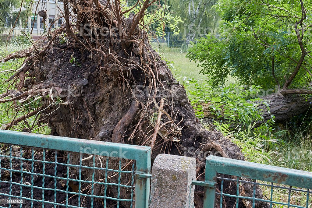 Fallen tree in park stock photo