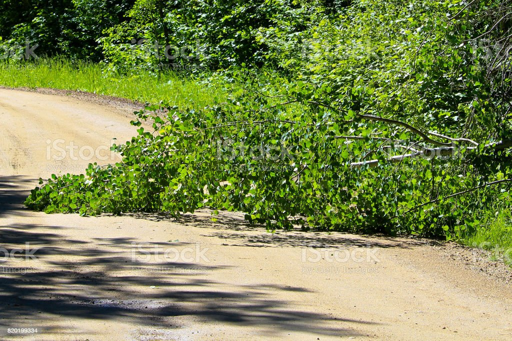 Fallen tree in the middle of a rural road stock photo