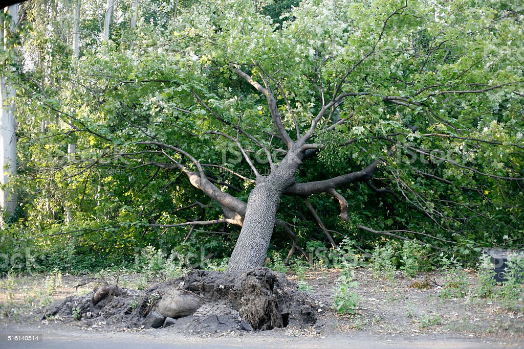Fallen tree in the park stock photo
