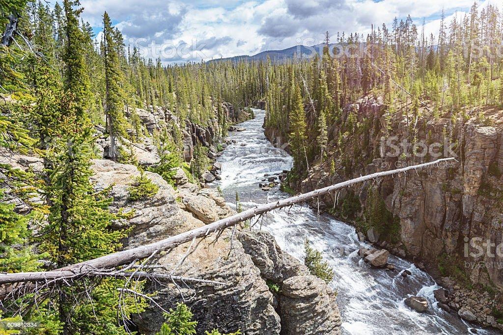 Fallen Tree Lewis River Yellowstone National Park Wyoming USA stock photo